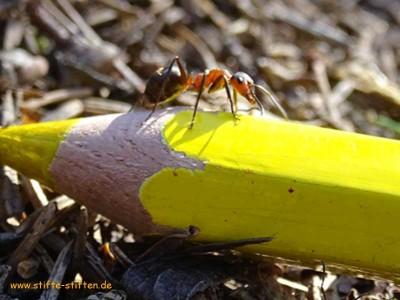 Stifte-Stifter setzen sich wie Ameisen für die Umwelt ein