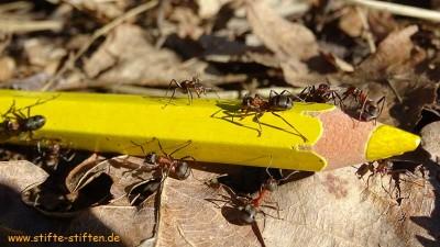 Stifte-Stifter sammeln Stifte so eifrig wie Ameisen