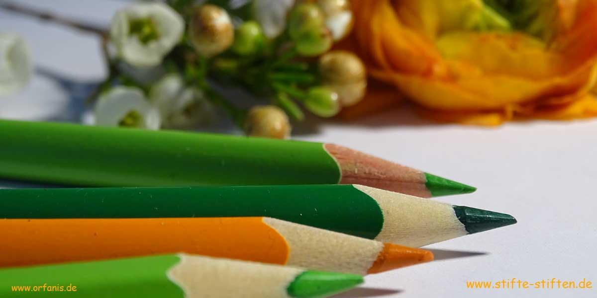 Umweltschule und Nachhaltigkeit